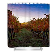 Morning At The Vineyard Shower Curtain by Bill Gallagher