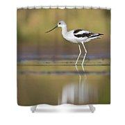Morning Avocet Shower Curtain