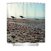 Morning Beach Preen Shower Curtain
