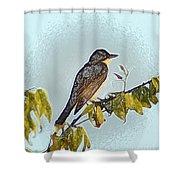 Morning Bird Shower Curtain