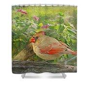 Morning Cardinal Shower Curtain