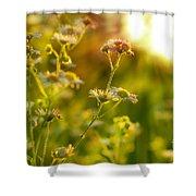 Morning Chamomiles Shower Curtain