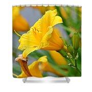 Morning Daylilies Shower Curtain