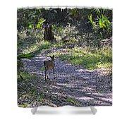 Morning Deer Shower Curtain