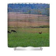 Morning Deer In Cades Cove Shower Curtain