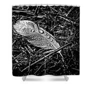 Morning Dew Shower Curtain by Bob Orsillo