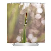 Morning Dew On A Grass Shower Curtain