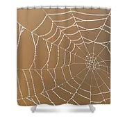 Morning Dew On Web Shower Curtain