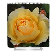 Morning Dew Rose Shower Curtain