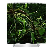 Morning Dews Shower Curtain