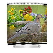 Morning Dove With Pansies Shower Curtain
