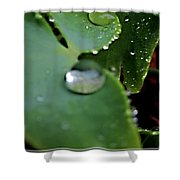 Morning Fresh Leaves With Droplets Shower Curtain