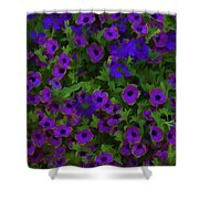 Morning Glories Are Beautiful Shower Curtain