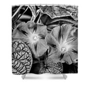 Morning Glory - Bw Shower Curtain