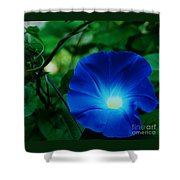 Morning Glory # 2 Shower Curtain