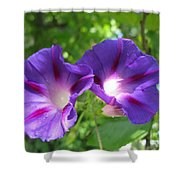 Morning Glory Couple Or 2 Purple Ipomeas Shower Curtain