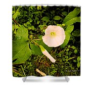 Morning Glory Glow Shower Curtain