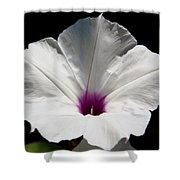 Morning-glory Shower Curtain