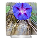 Morning Glory On The Fence Shower Curtain