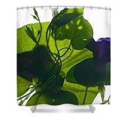 Morning Glory Rising Shower Curtain