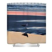 Morning Gull Shower Curtain