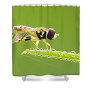 Morning Hoverfly Shower Curtain