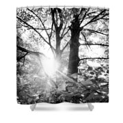 Morning In The Forest Shower Curtain