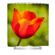 Morning Joy Shower Curtain by Davorin Mance