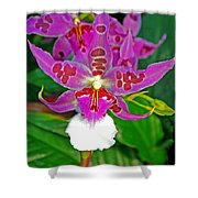 Morning Joy Orchid Shower Curtain