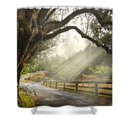 Morning Light Shower Curtain