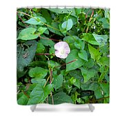 Morning Magenta Glow Shower Curtain