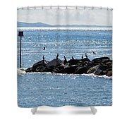 Morning Meeting - Lyme Regis Shower Curtain