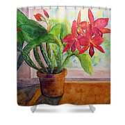 Morning Orchids Shower Curtain