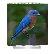 Morning Perch Shower Curtain