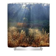 Morning Rays Through Live Oaks Shower Curtain
