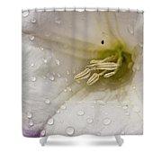 Morning Shower Shower Curtain