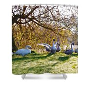 Morning Stretch - Impressions Shower Curtain