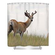 Morning Stroll Shower Curtain