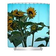 Morning Sunflowers Shower Curtain