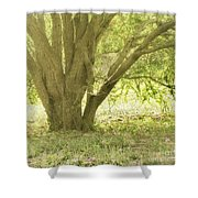 Morning Tree Shower Curtain