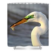 Morning's Catch Shower Curtain