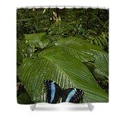 Morpho Butterfly In Rainforest Ecuador Shower Curtain