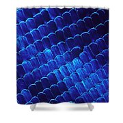 Morpho Butterfly Scales Shower Curtain