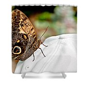 Morphos Butterfly On White Baseball Cap Art Prints Shower Curtain