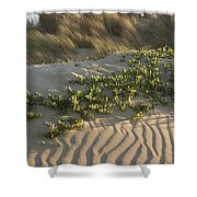 Morro Beach Textures Shower Curtain