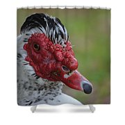 Moscovy Duck With Hairdo Shower Curtain