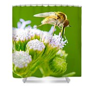 Mosquito  Shower Curtain