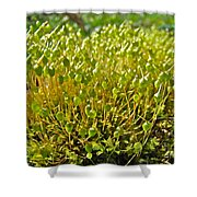 Moss And Fruiting Bodies - Green Lane Pa Shower Curtain