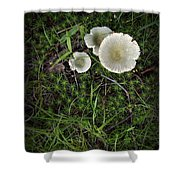Moss And Fungi Shower Curtain