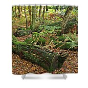 Moss Covered Logs On The Forest Floor Shower Curtain